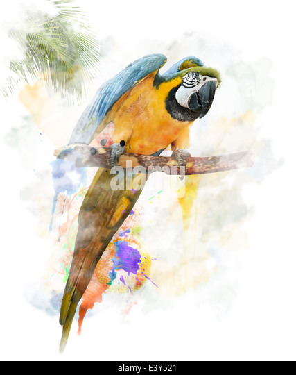 Watercolor Digital Painting Of Colorful Parrot - Stock-Bilder