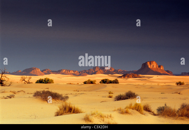 Algeria, Djanet, Sahara dessert, plants surviving in sand. Background: rocks. - Stock Image