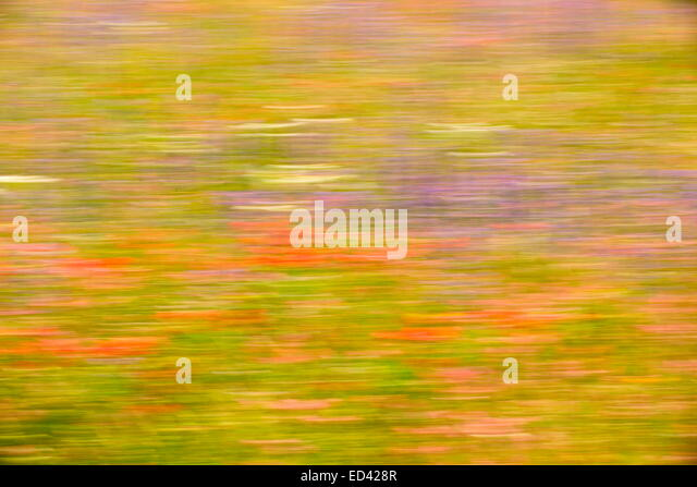 Impressionist view of a flowery meadow in eastern Turkey. - Stock Image
