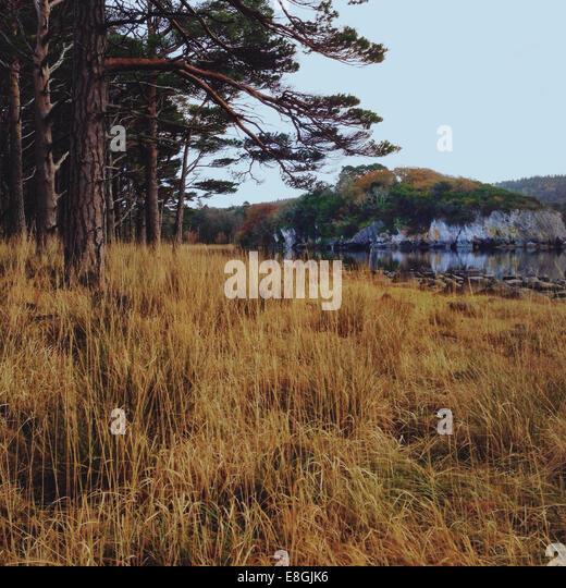 Ireland, Munster, County Kerry, Killarney, Autumn Landscape - Stock-Bilder