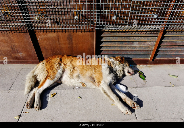 Stray dog sleeping among litter in a city street - Stock Image