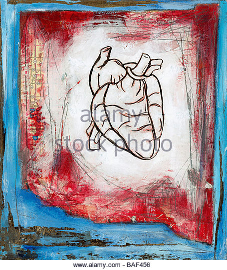 Anatomical Heart - Stock Image