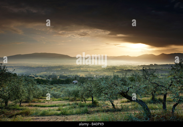 an olive grove overlooking Bevagna and the Val di Spoleto at dawn, Umbria, Italy - Stock Image