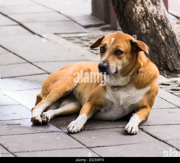 Blind Golden Retriever Gets Guide Dog