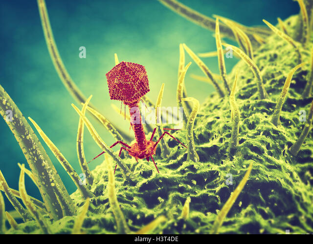 Bacteriophage viruses , Infectious disease , Phage therapy - Stock Image