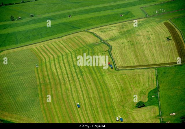 Harvesting Sliage, Yorkshire Dales, nr Pately Bridge, North Yorkshire, Northern England - Stock Image