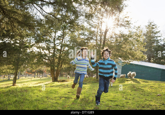 Two children at an animal sanctuary in a paddock feeding two sheep - Stock Image