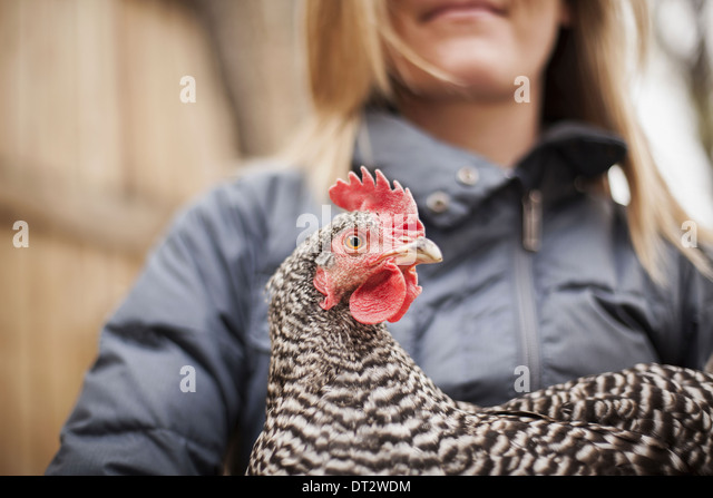 A woman wearing a grey coat and holding a chicken - Stock Image