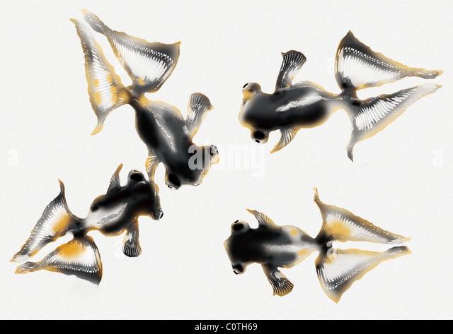 Pattern of Japanese Painting, Goldfish - Stock Image