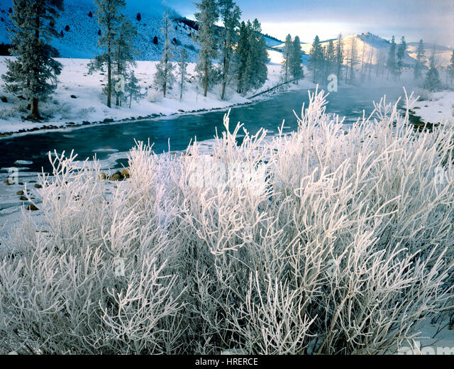 Icy trees along the Main Fork of the Salmon River, Idaho    Sawtooth Mountains - Stock-Bilder