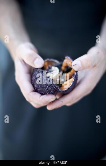 chef opening purple sea urchin. food, open, sea hedgehog, hands. - Stock Image