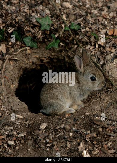 Rabbit Burrow Rabbit In His Burrow By