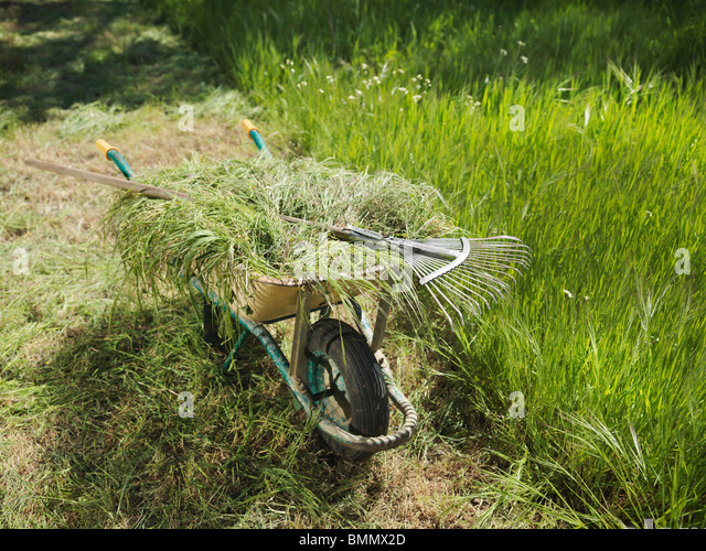 Wheelbarrow full of hay and rake - Stock Image