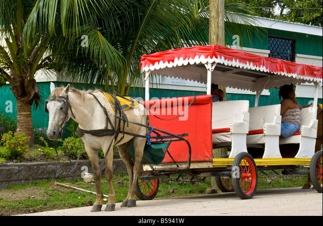 Belize City white horse and red buggy carriage for tourist rides at Belize Tourism Village - Stock Image