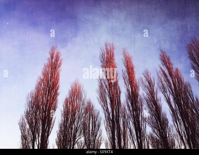 Arty tree patterns. - Stock Image