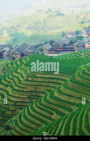 Dragons Backbone rice terraces, Longsheng, Guangxi Province, China, Asia - Stock Image