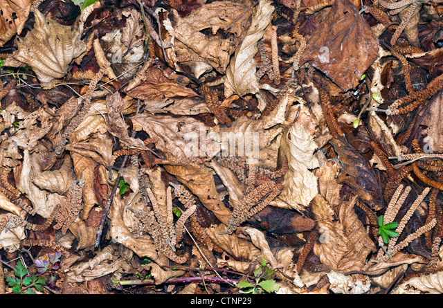 Dead leaves in garden - France. - Stock Image