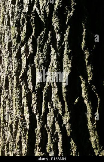 Close-up of  tree bark  texture illuminated by strongly  angled sunlight - Stock-Bilder