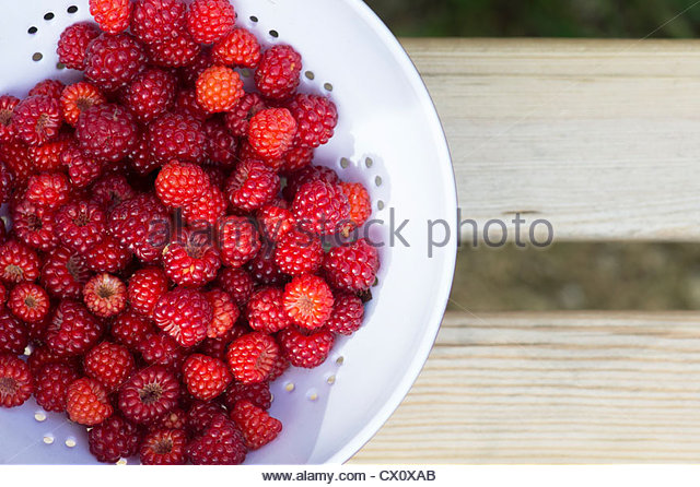 Picked Japanese wineberries in a colander on a wooden seat - Stock-Bilder
