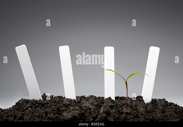 Sapling with blank labels - Stock Image