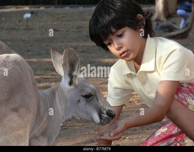 Australia,Currumbin Sanctuary,Boy and Kangaroo - Stock Image