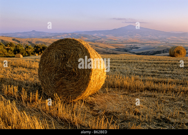Bale of straw, harvested wheatfields, landscape around Radicofani and Monte Amiata at sunset, Val d' Orcia near - Stock Image