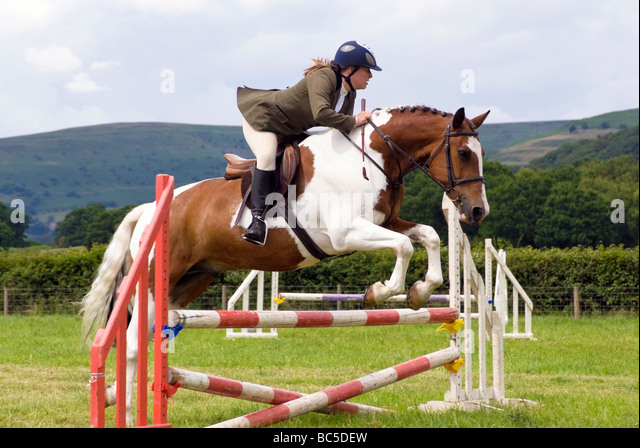 Woman rider in a show jumping competition at Pandy Show, nr Abergavenny, Wales, UK. Brown & white horse jumps - Stock Image