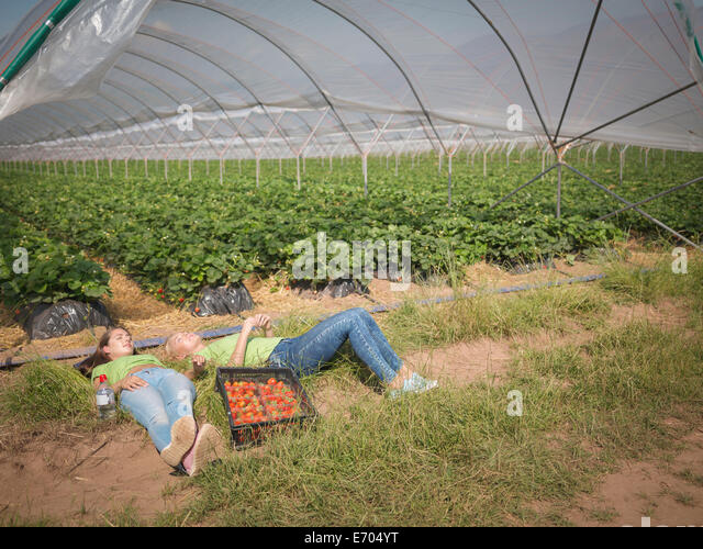 Strawberry pickers resting near polytunnel of fruit farm - Stock Image