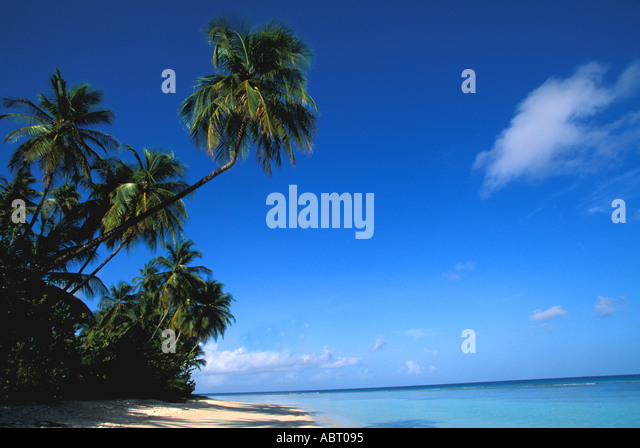 Caribbean deserted beach and palm trees - Stock Image