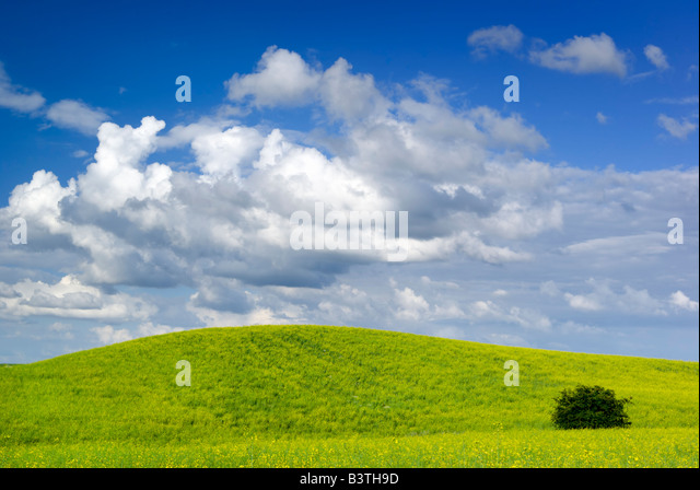 Summer landscape - saturated view of meadow. Europe, Poland. Adobe RGB (1998). - Stock-Bilder