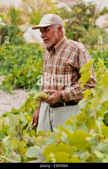 A farmer in a vineyard; Cappadocia, Turkey - Stock Image