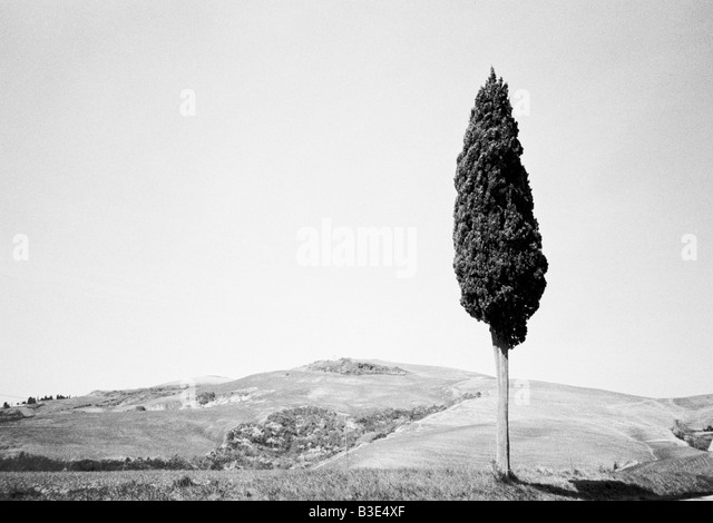 Tuscany Italy black & white landscape with a single tree - Stock Image
