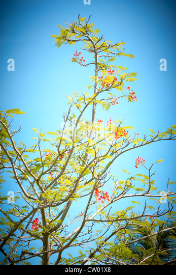 Asian trees, Borneo - Stock Image