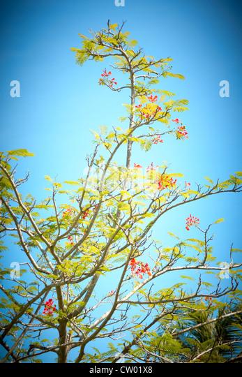 Asian trees, Borneo - Stock Image