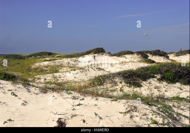 Florida Grayton Beach State Park sand dunes - Stock Image