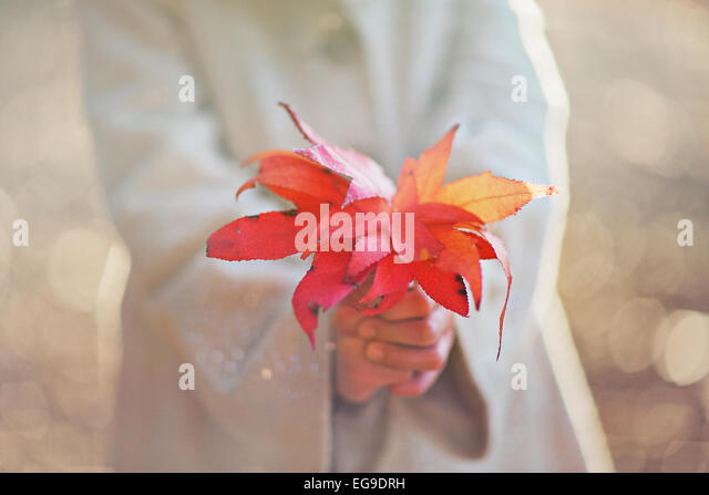 Girl holding fall leaves - Stock Image