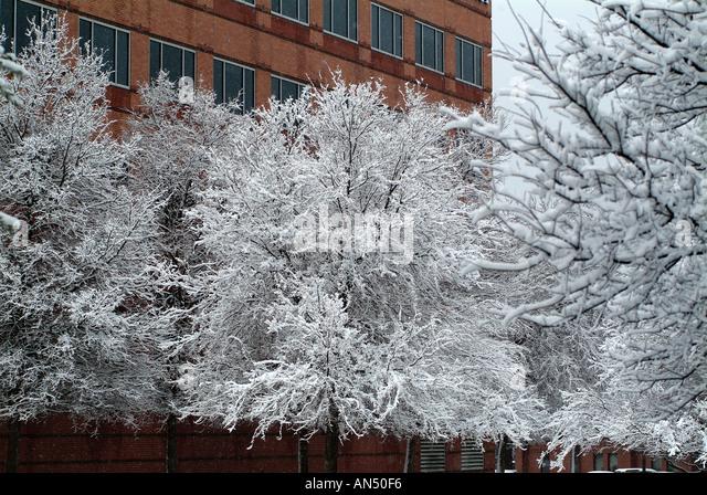 Texas Snow Covered Stock Photos Amp Texas Snow Covered Stock
