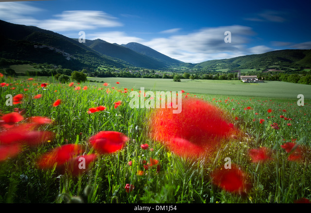 field nr Campi, Umbria, Italy - Stock Image