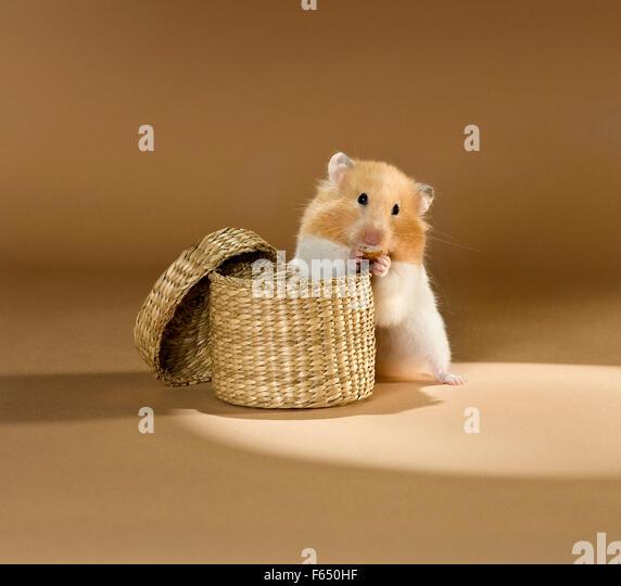 Cat Eating Wicker Basket