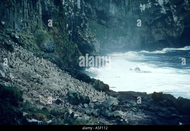 Quintessential subantarctic rough inhospitable grey stormy steep cliffs erect crested penguin colony Antipodes Islands - Stock Image
