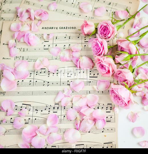 pink roses on vintage music paper - Stock-Bilder