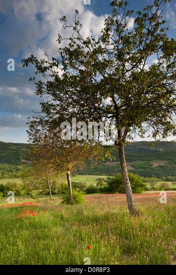 the Valnerina near Campi, Monti Sibillini National Park, Umbria, Italy - Stock Image