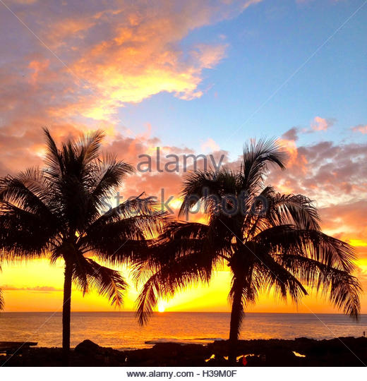palm tree silhouettes in vibrant sunset sky - Stock Image