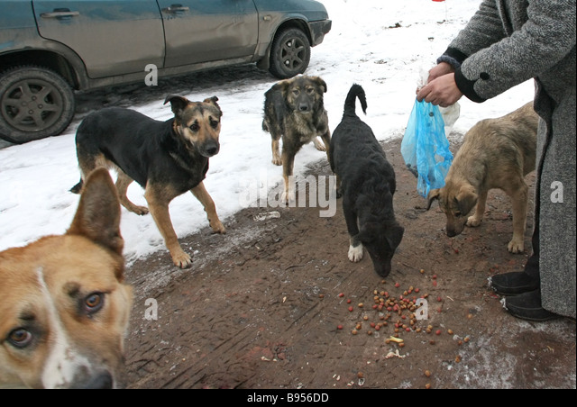 Citizens feeding stray dogs - Stock Image