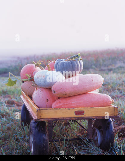 pumpkins and gourds in wagon - Stock Image