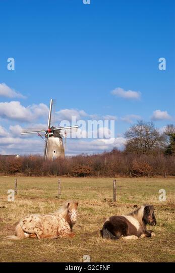 Wijchen Stock Photos & Wijchen Stock Images