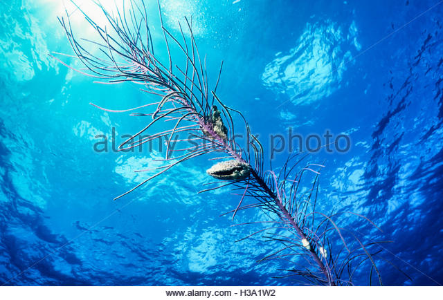 underwater soft coral scenic - Stock Image