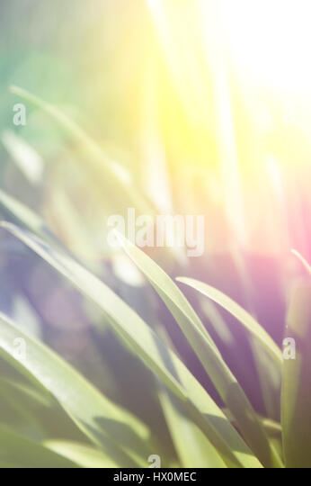 Close up image of grass with retro effect - Stock Image
