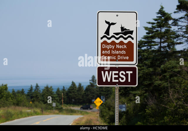Digby Neck Whale Watching Tours