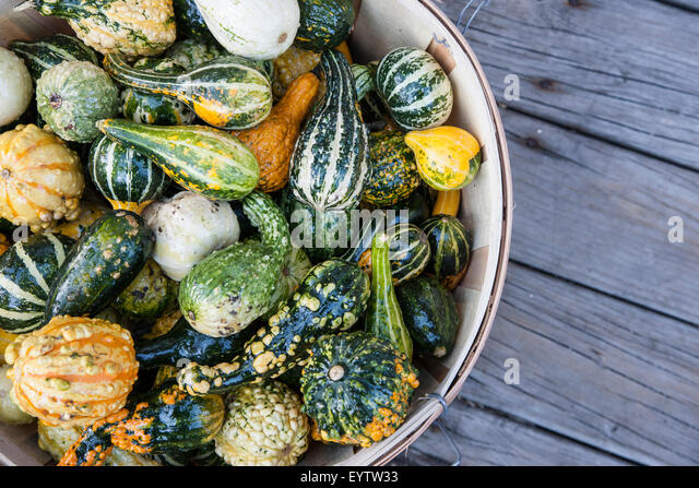 Autumn harvest various squash in a basket - Stock Image